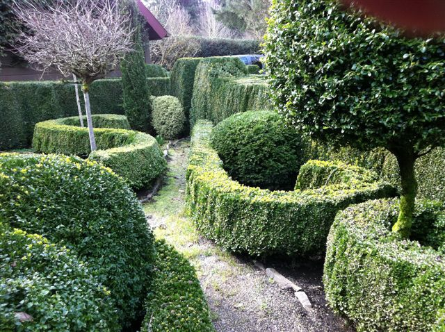 Boxwood Garden Hedges And Edges